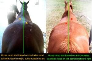 asymmetric horse